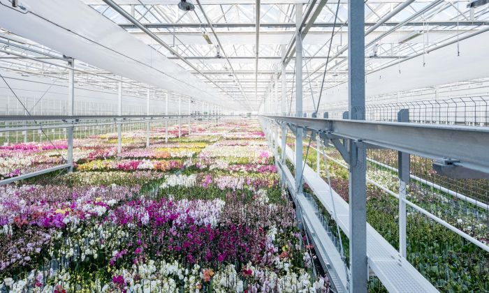 Greenhouse Ter Laak Orchids, Wateringen, 175.000 sqm. Photo by Johannes Schwartz.